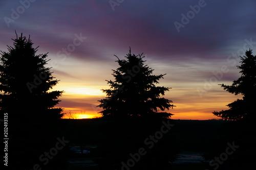 Foto op Aluminium Nacht snelweg Sunrise Pines