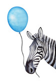 Funny zebra character holds a string with a holiday balloon in mouth. Hand drawn watercolour graphic painting on white background, cutout clip art. Party print, poster template, festive decoration. - 202513142