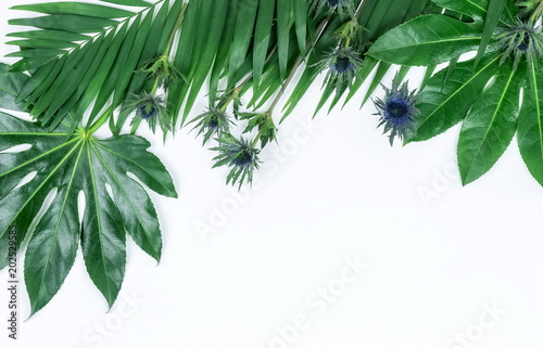 Poster Vegetal Abstract frame made of green tropical leaves on white background. Flat lay, top view. copy space