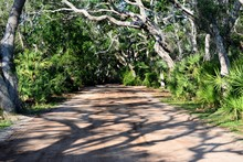 Dirt Road Background With Tropical Hammock Trees