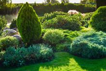 Ornamental Bushes Of Evergreen...