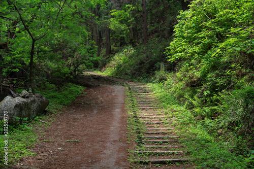 Tuinposter Weg in bos 新緑の山道