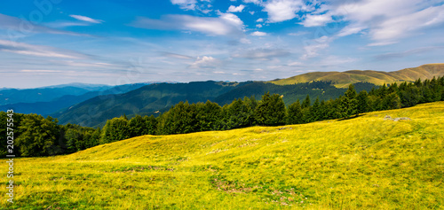 In de dag Oranje gorgeous weather over grassy slopes of Carpathians. wonderful mountain landscape with beech forests on hillside in summer time. Location Svydovets mountain ridge, Ukraine