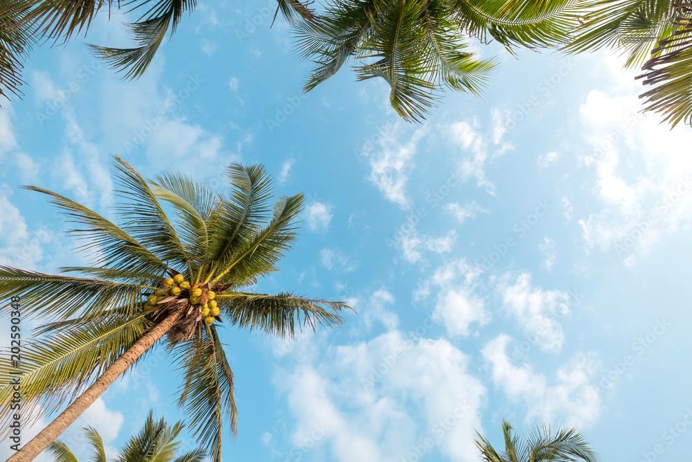 Rocznik natury tło - kokosowy drzewko palmowe na tropikalnym plażowym niebieskim niebie z światłem słonecznym ranek w lecie, uprisen kąt. vintage filtr instagram <span>plik: #202590348 | autor: jakkapan</span>