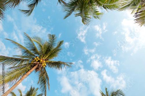 Rocznik natury tło - kokosowy drzewko palmowe na tropikalnym plażowym niebieskim niebie z światłem słonecznym ranek w lecie, uprisen kąt. vintage filtr instagram