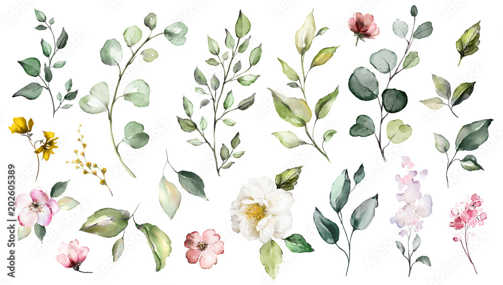 Fototapety, obrazy: Big Set watercolor elements - wildflowers, herbs, leaf. collection garden and wild, forest herb, flowers, branches.  illustration isolated on white background, exotic  leaf. Botanic