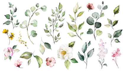 Fototapeta Przyprawy Big Set watercolor elements - wildflowers, herbs, leaf. collection garden and wild, forest herb, flowers, branches. illustration isolated on white background, exotic leaf. Botanic