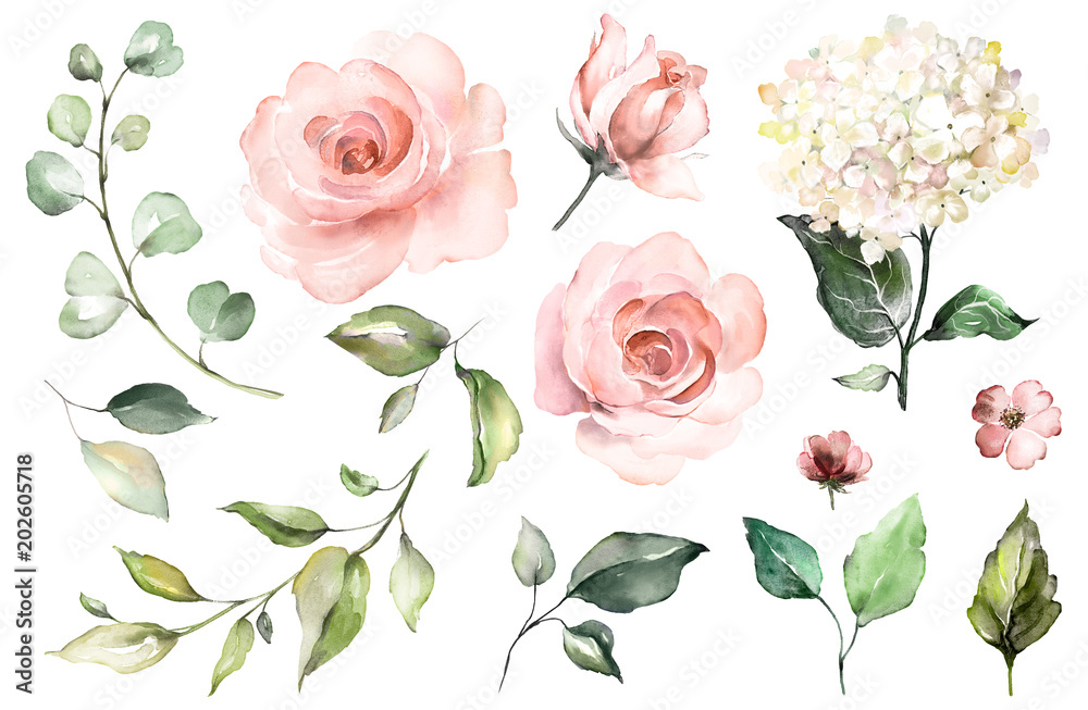 Fototapety, obrazy: Set watercolor elements of roses, hydrangea.collection garden pink flowers, leaves, branches, Botanic  illustration isolated on white background.  bud of flowers