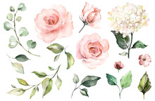 Set Watercolor Elements Of Roses, Hydrangea.collection Garden Pink Flowers, Leaves, Branches, Botanic  Illustration Isolated On White Background.  Bud Of Flowers