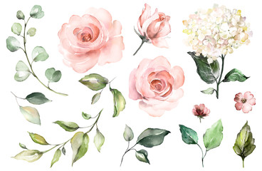 Panel Szklany Do cukierni Set watercolor elements of roses, hydrangea.collection garden pink flowers, leaves, branches, Botanic illustration isolated on white background. bud of flowers