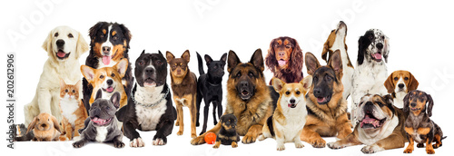 Foto  group of dogs on a white background