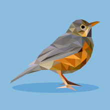Rufous-bellied Thrush In Polyg...