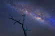 Milky way over dead tree. universe space shot of milky way galaxy with stars on a night sky background.