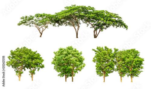 Fotografia, Obraz  big tree