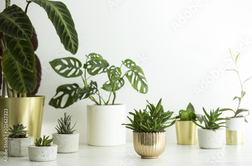 The Stylish Interior Filled With A Lot Of Modern Plants In