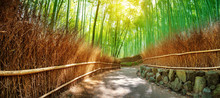 Path In Bamboo Forest In Kyoto...
