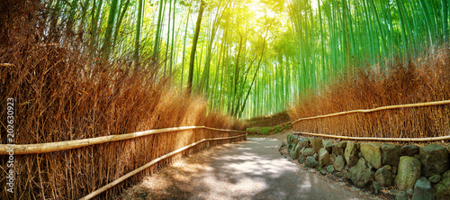 Poster Bamboe Path in bamboo forest in Kyoto, Japan. Woods in Arashiyama destrict