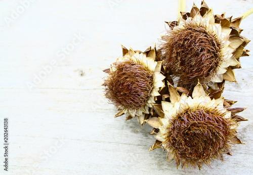 Fleurs D Artichaut Sec Chardon Acheter Cette Photo Libre De Droit