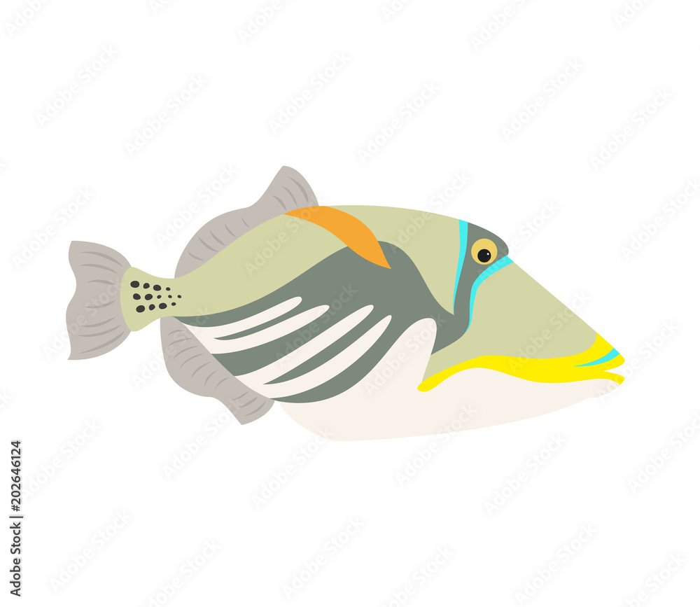 Picasso triggerfish fish icon on white background.