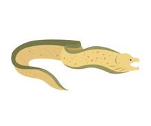 Moray Eel On White Background.