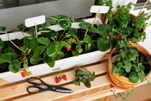 Urban Gardening On The Balcony...