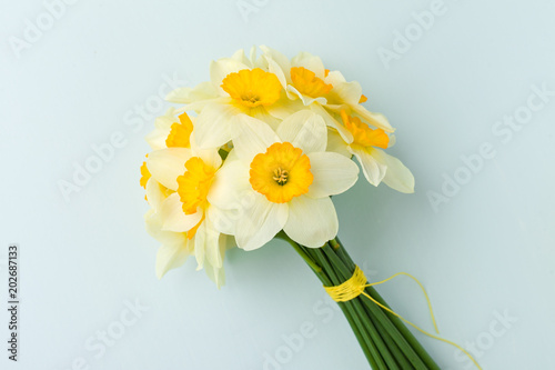 In de dag Narcis Spring flowers daffodil bouquet - white narcissus on blue pastel background.