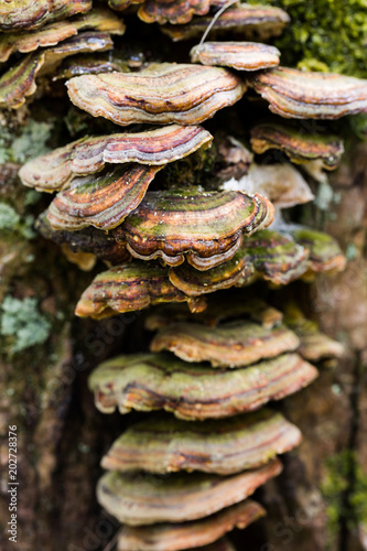 Fényképezés Polypores in golden green colours connected to the trunk of a tree