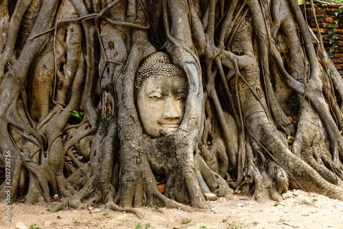 Photo Stands Place of worship A temple in Ayutthaya with the head of the Buddha hidden in the banyan tree.