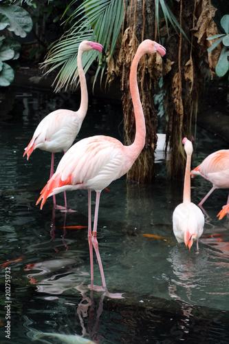 Papiers peints Flamingo flamants roses 2