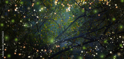 Poster Bossen Abstract and magical image of Firefly flying in the night forest. Fairy tale concept.