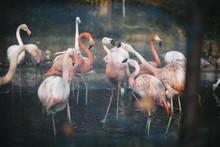 Flamingo Is Fighting