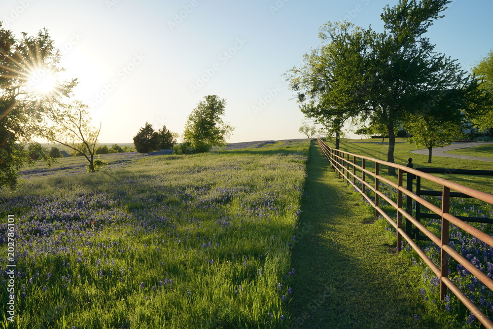 Fototapety, obrazy: View along Texas Bluebonnets trail during spring time around the Texas Hill Country