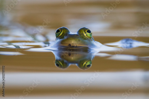 Tuinposter Kikker The reflection of a frog