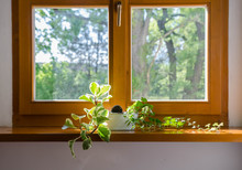 Plants In Pot In The Window - ...