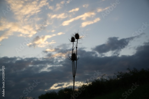 Foto op Canvas UFO Meadow flowers silhouettes during sunset. Slovakia