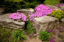 Flowering Rock Garden In Sprin...