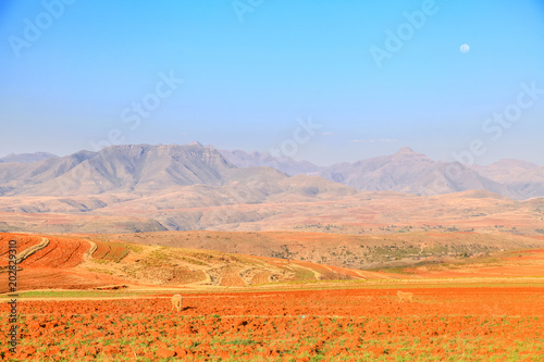 Poster Oranje eclat Dramatic beautiful mountain landscape with terrassed fields during spring, Lesotho, Southern Africa