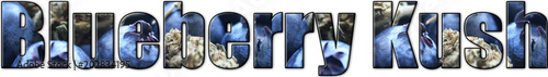 Photo  Blueberry Kush Logo With Marijuana Bud & Blueberries Inside Letters High Quality