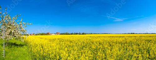 Spoed Foto op Canvas Geel Panoramic view of beautiful farm landscape of rapeseed field in Spring
