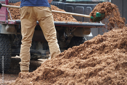 Photo sur Toile Saumon close up on outdoor worker working on adding mulch in the garden