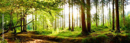 Spoed Fotobehang Bos Beautiful forest in spring with bright sun shining through the trees