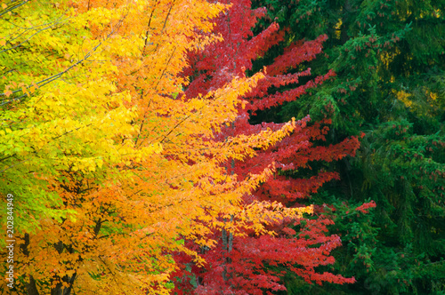 Fotomural Layers of Autumn Color