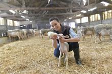 Breeder Woman Feeding Lamb Wit...