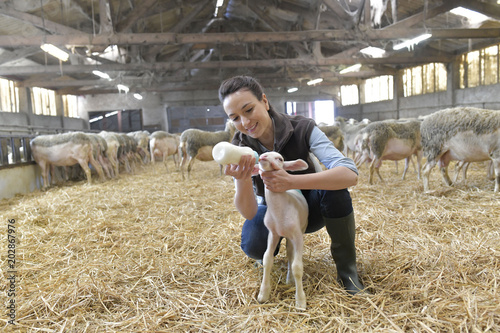 Foto Breeder woman feeding lamb with baby bottle