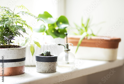 Fototapety, obrazy: Interior of kitchen garden plants with different ceramic and concrete pots on the window sill. Close up of stylish home garden.