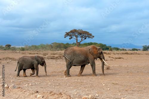 Foto op Plexiglas Afrika Elephant in National park of Kenya
