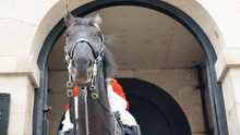 The Horse Of The Royal Guard L...