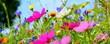Leinwandbild Motiv Blumenwiese bunt - Hintergrund Wildblumen