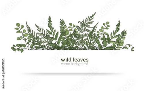 Foto  Beautiful horizontal background or banner decorated with gorgeous ferns, wild herbs or green herbaceous plants