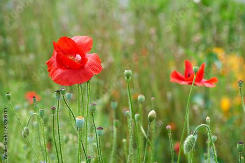 Plakat kwiaty lato Park charakter rośliny szklarnia tło kartkę z życzeniami